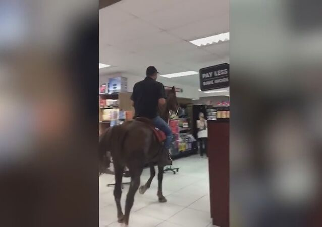 A Horse Is Actually Shopping