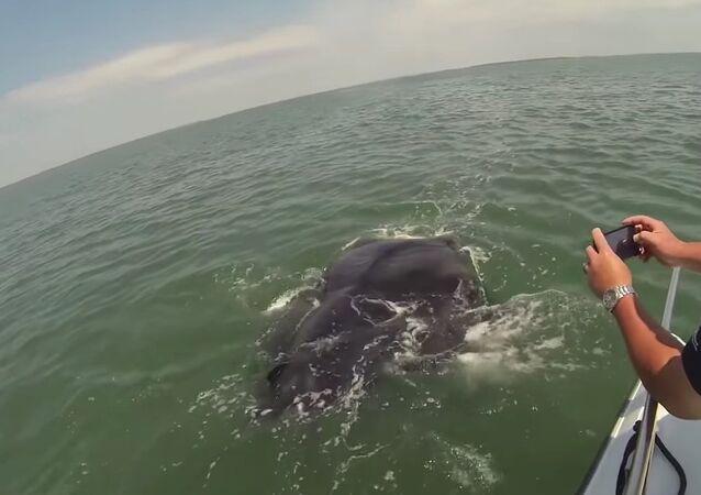 Car-sized sea creature surprises South Carolina fishermen