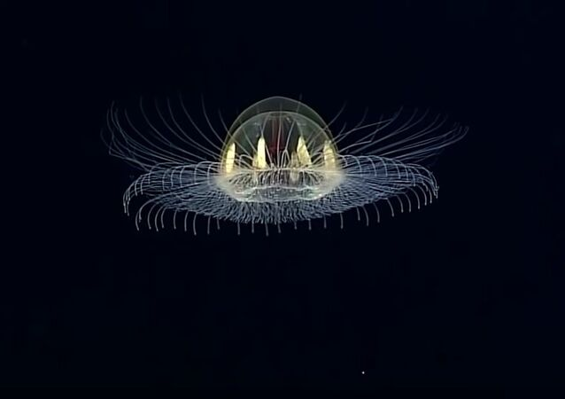 Cosmic Jellyfish Found Near American Samoa