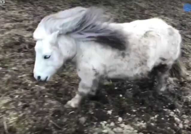 This horse is the best dancer you'll ever see