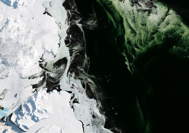 Antarctica's Granite Harbor, turned green by phytoplankton. The photos were taken by NASA's Operational Land Imager (OLI).