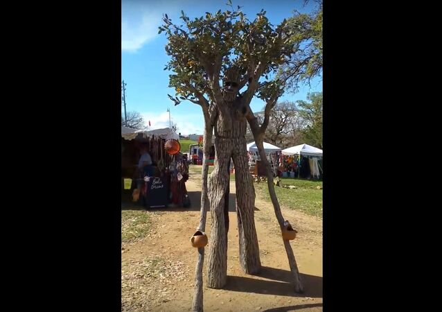 Walking, Talking, Tree at Llano Earth Art Festival