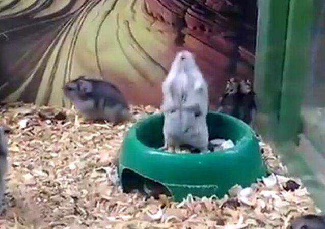 Hamster is broken