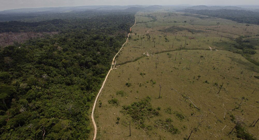 Deforested area is seen near Novo Progresso in Brazil's northern state of Para