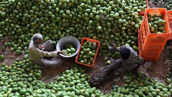 Indian laborers sort mangoes at a fruit market in Hyderabad, India, Wednesday, May 7, 2014. - Sputnik International