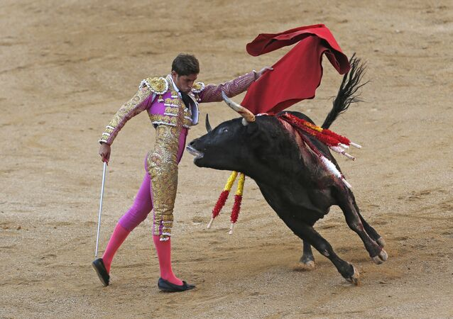 In a Sunday, October 9, 2016 file photo, Spanish bullfighter Mario Palacios performs with an Aguadulce ranch fighting bull during a bullfight at the Las Ventas bullring in Madrid, Spain.