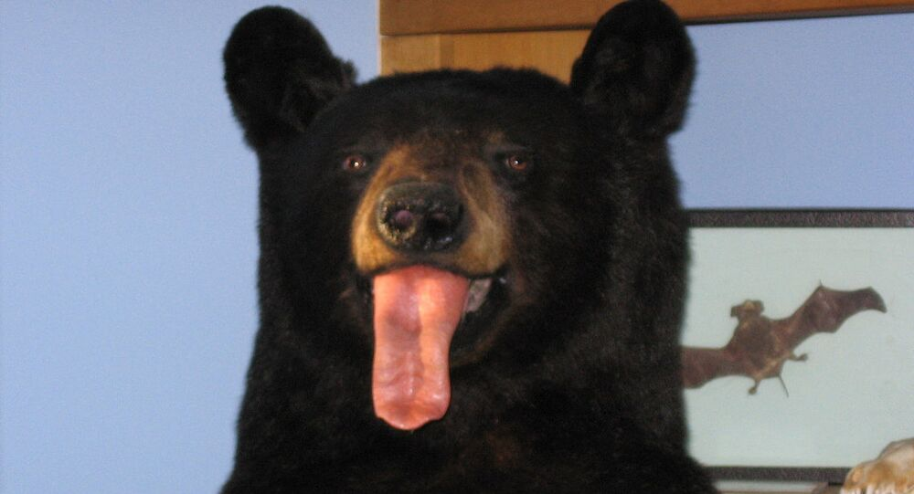 April Fool's Bear