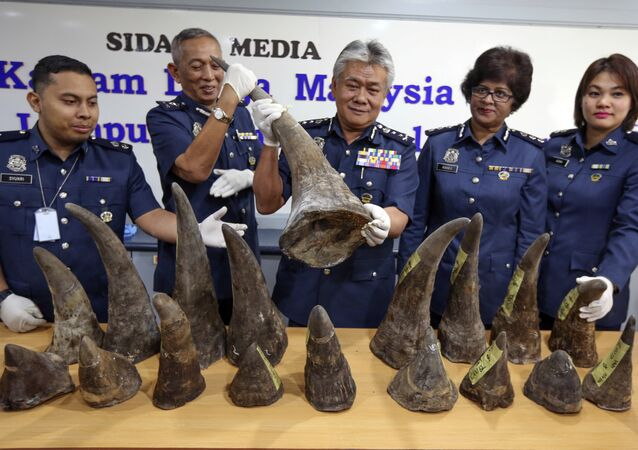 Malaysia Custom Director Hamzah bin Sundang, center, poses with the Rhino horns confiscated at KL International Airport last week, during a press conference in Custom office in Sepang, Malaysia on Monday, April 10, 2017.