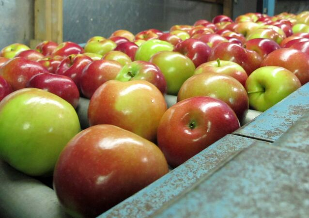 apples moving along a conveyor line