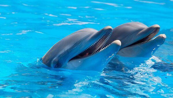 Dolphins - Sputnik International