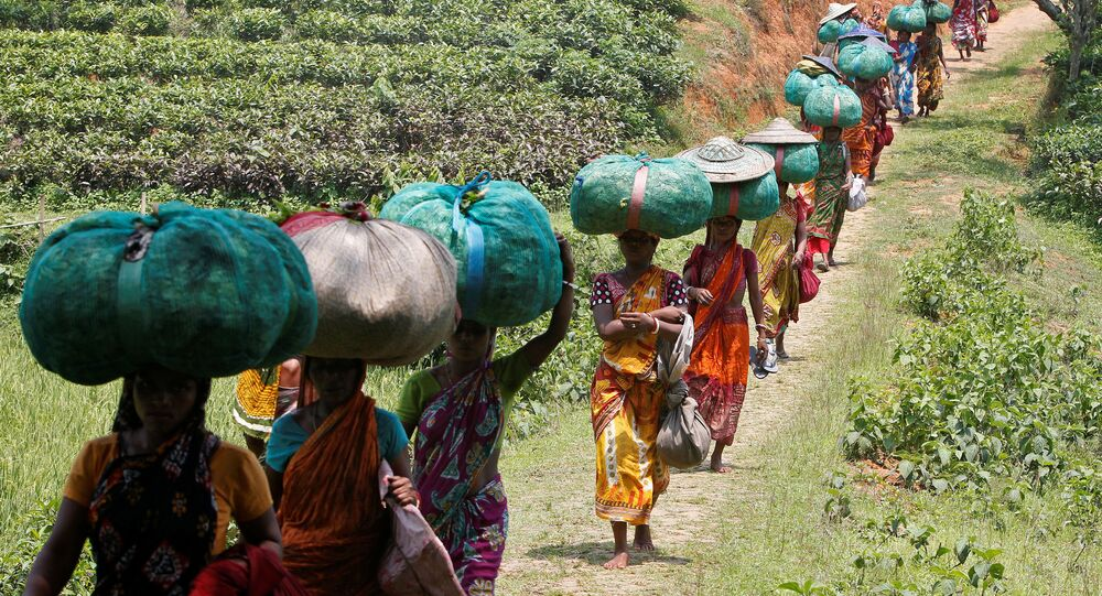 Tea garden workers carry sacks filled with tea leaves at Durgabari Tea Estate on the outskirts of Agartala, India May 4, 2017.