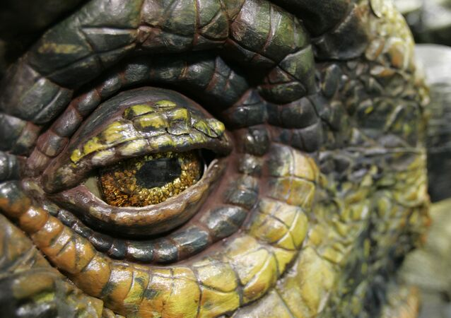 A close-up of the eye of the Ankylosaurus dinosaur is shown Wednesday, June 20, 2007 in Tacoma, Wash.
