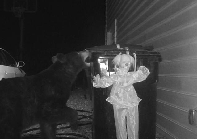 Bear Problem Solved
