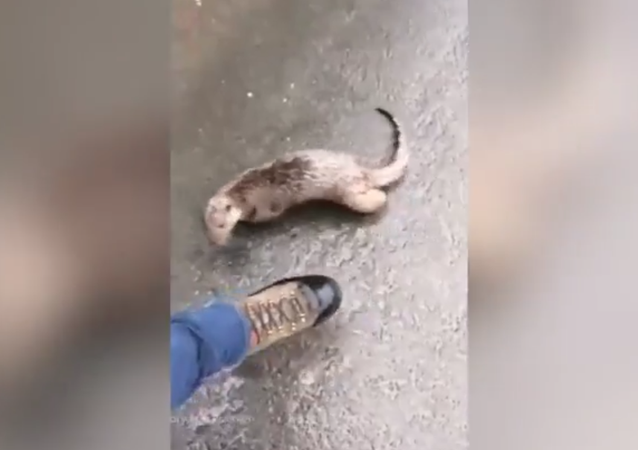 'I'm being chased by an otter!': Hilarious man versus beast