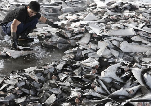 Shark finning In Taiwan