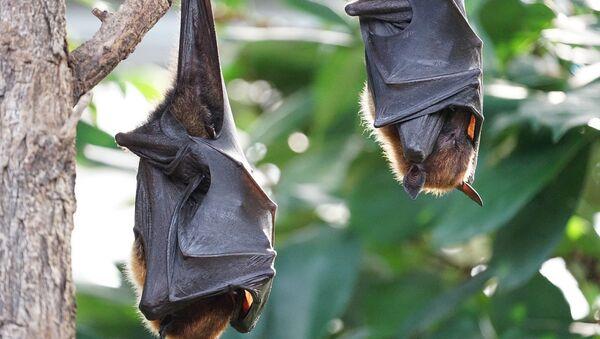 Vampire bats - Sputnik International