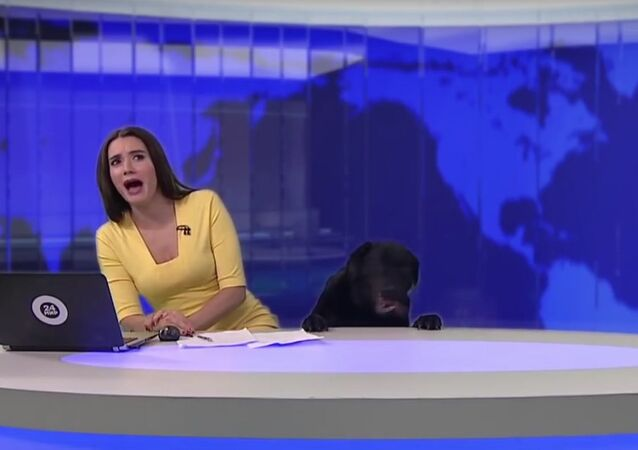 Woof! Dog Interrupts Newscast on Live TV in Russia