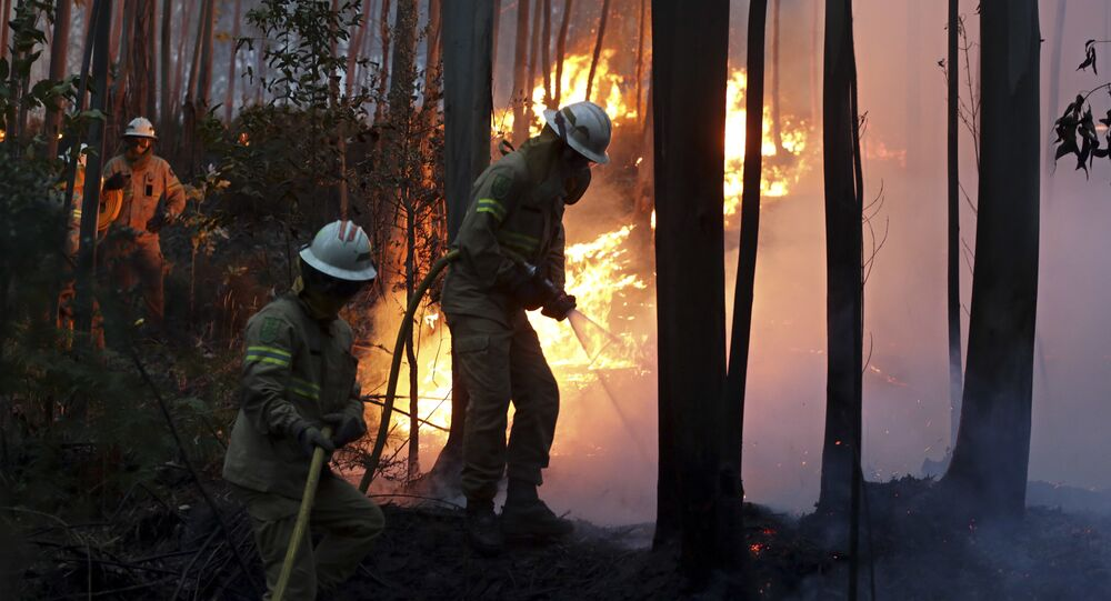 Firefighters of the Portuguese National Republican Guard work to stop a forest fire from reaching the village of Avelar, central Portugal, at sunrise
