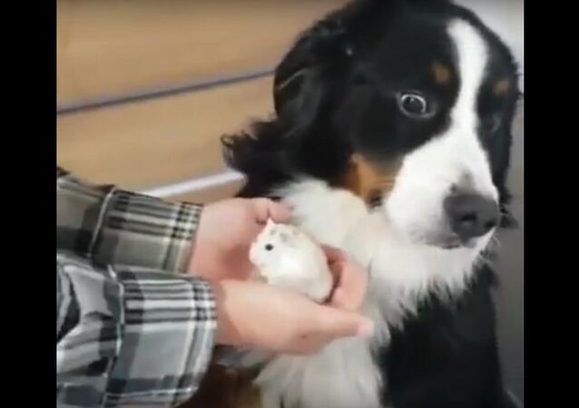 This dog's reaction to his owner's new hamster is hilarious 😂😂