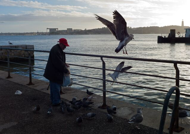 An elderly man feeds seagulls and pigeons by the Tagus river at the Cais do Sodre dock in Lisbon Tuesday, Jan. 12 2016