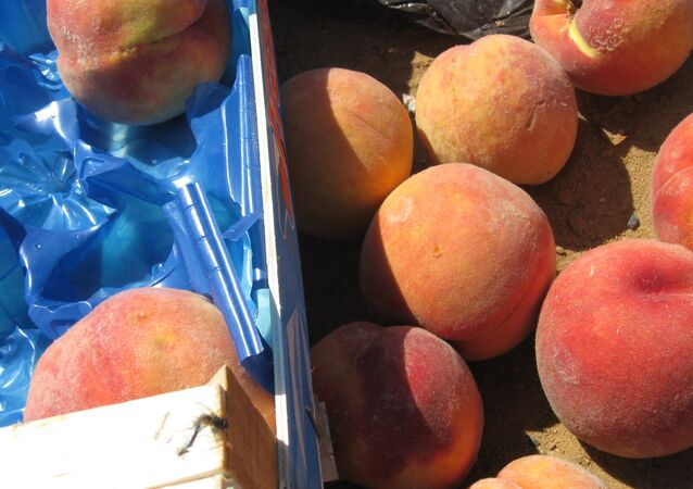 A batch of European sanction products (peaches) eliminated as part of the activities of the Federal Service for Veterinary and Phytosanitary Surveillance in the Bryansk Region
