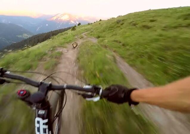 Groundhog Surprises Unsuspecting Cyclist