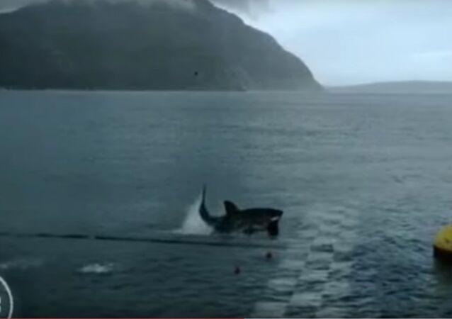 Michael Phelps VS Great White Shark Full Race