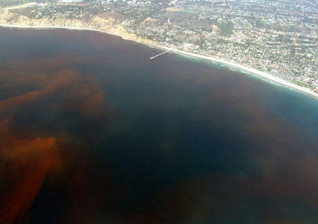 A red tide off the coast of La Jolla San Diego, California. (File)