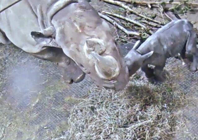Kendi The Black Rhino Celebrates One Week Birthday