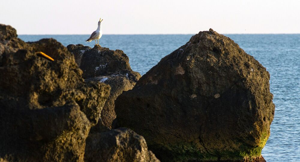 A sea gull on the coast of the Sea of Azov in the vicinity of the resort Kurortnoye