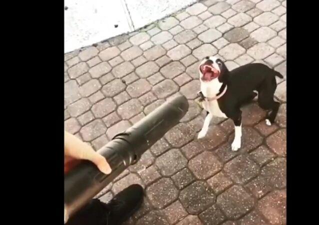 Doggo vs leaf blower