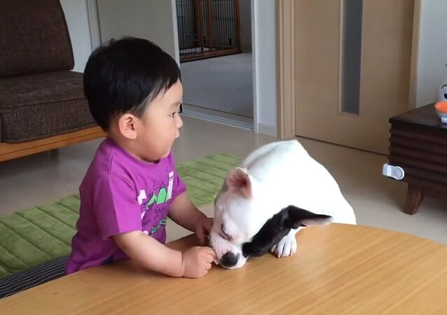 Baby cries when dog takes his rice cracker