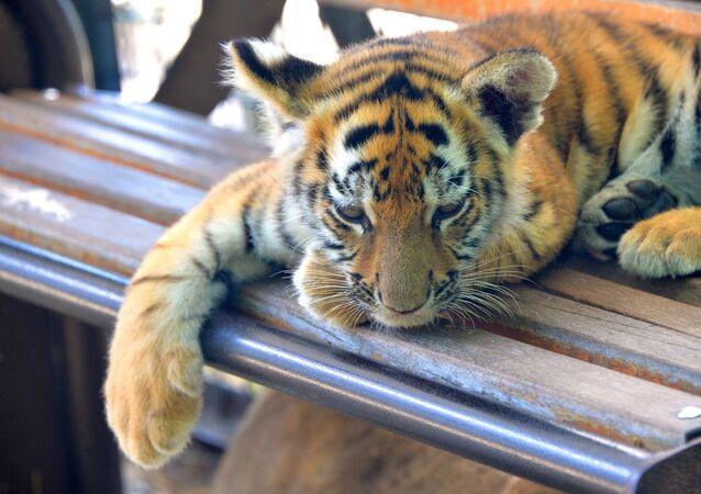 Taigan safari park in Crimea