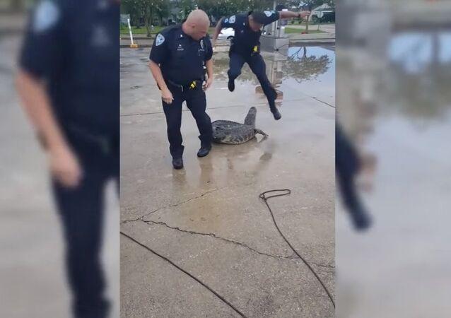 Louisiana police deputy gets fright while capturing alligator