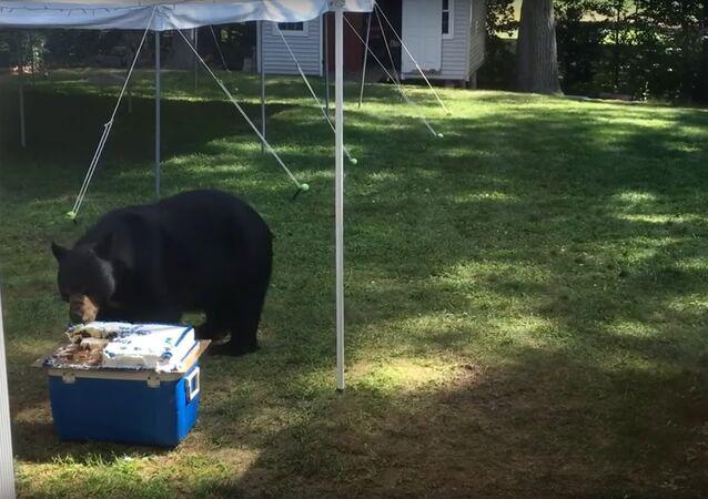 Birthday Cake Bear Thief