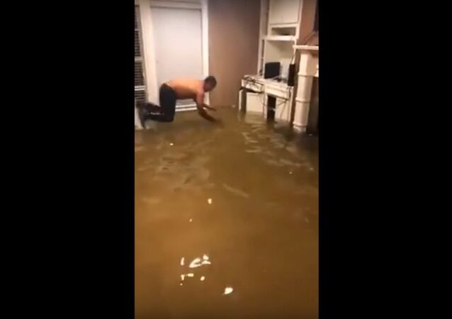 Man Dives Into Water in Flooded House to Capture Fish That Had Swam Inside