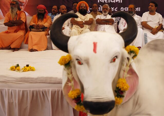 Hindu saints sit in protest against the killing of a calf by Congress party workers in the southern Indian state of Kerala, in Ahmadabad, India