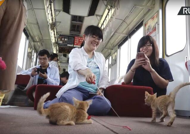 Japan's Cat Cafe Train