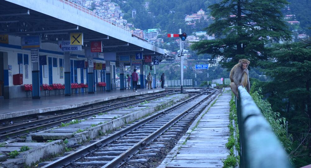 Monkey at the Shimla railway station. (File)