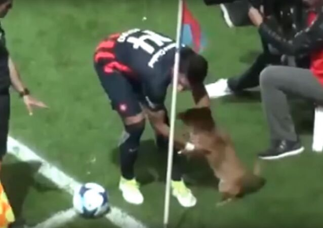 Little dog has interrupted a football match between San Lorenzo and Arsenal