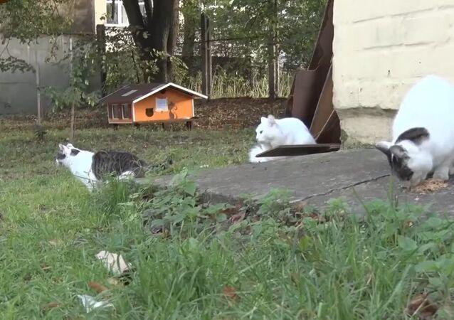 A Man Builds Feline Homes In Riga