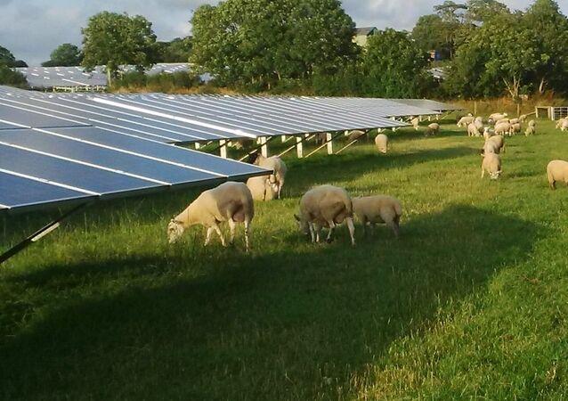 Solar farm with sheep grazing, Pembrokeshire