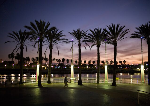 Palm Trees California