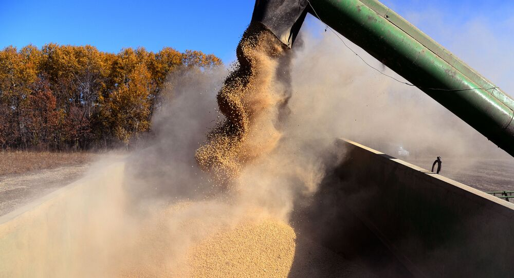 A combine unloads beans during soybeans harvesting in the Khabarovsk Territory