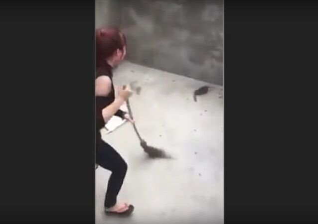 Woman attacked by a Rat that JUMPS on her as she sweeps | Rat Jumps on Woman