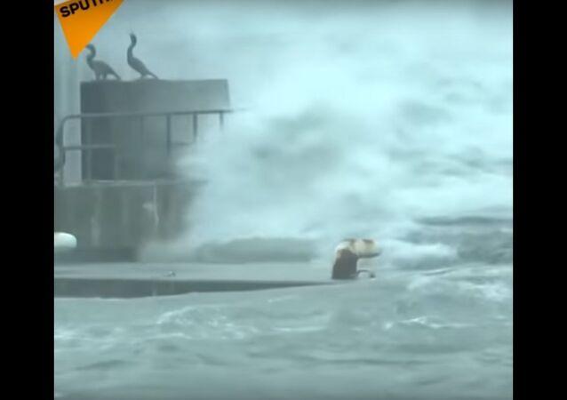Typhoon Lan Prompts Mass Evacuation In Japan