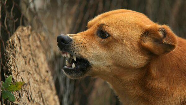 Angry dog - Sputnik International