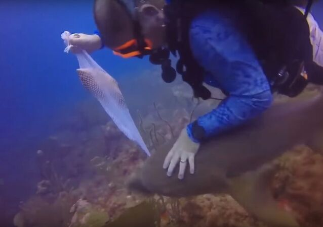 Diver gets in fight with shark after cheeky predator tries to steal the fish he caught for dinner