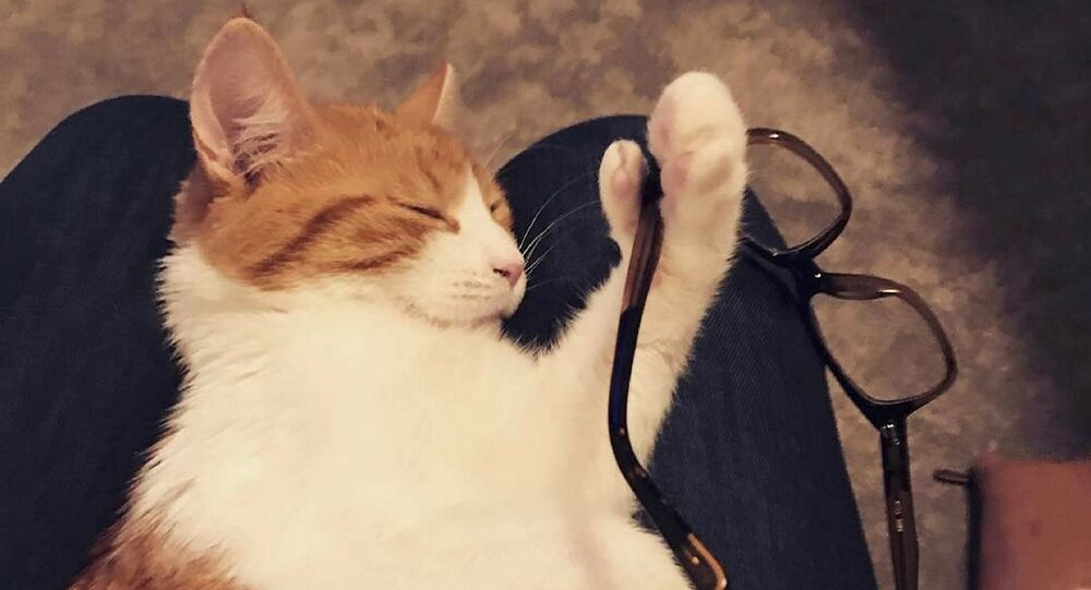 Paddles, the New Zealand Prime Minister Jacinda Ardern's ginger cat is seen in this April 2017 photo