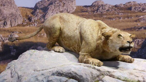 Cave lion - Sputnik International